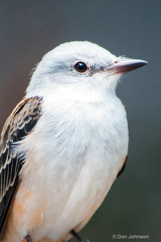 Bird at National Aviary