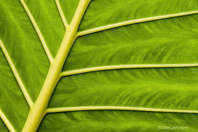National Zoo Leaf