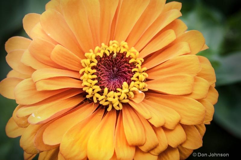 Pittsburgh Orange Flower