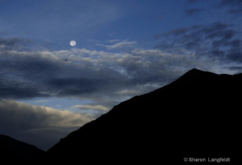 moon setting and bird in flight