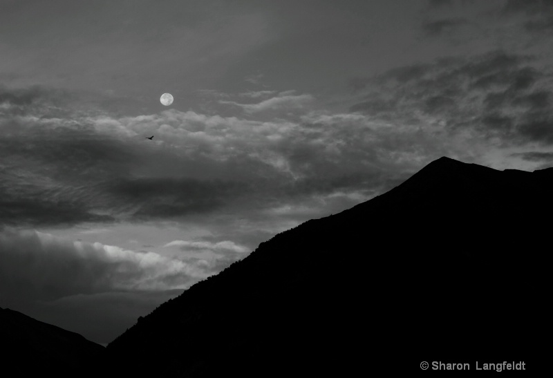 moon setting and bird in flight b w