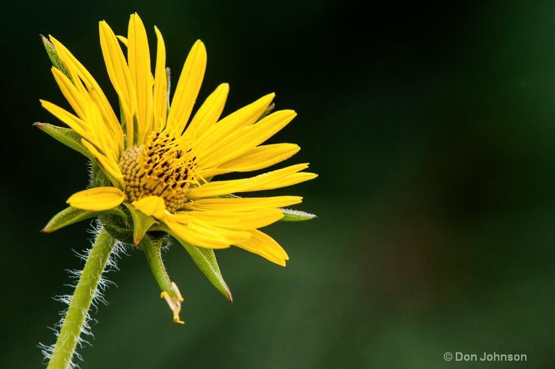 Yellow Pittsburgh Flower