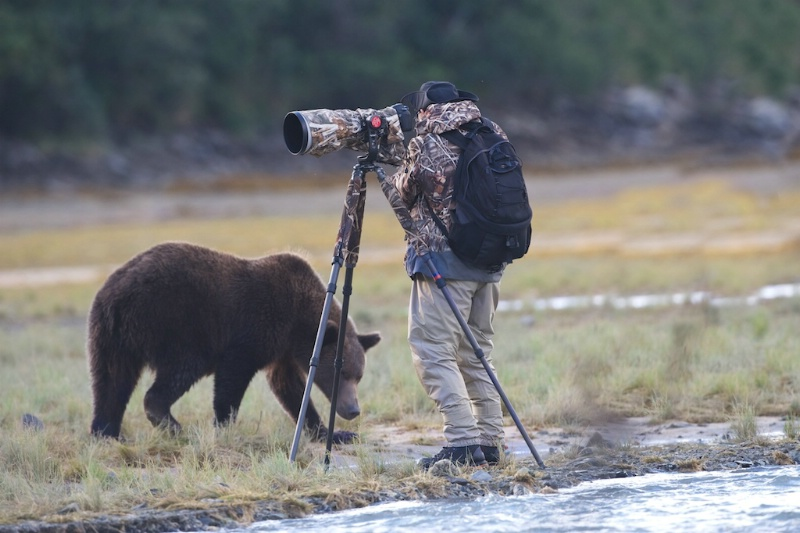 Bear Giving Howard the Eye