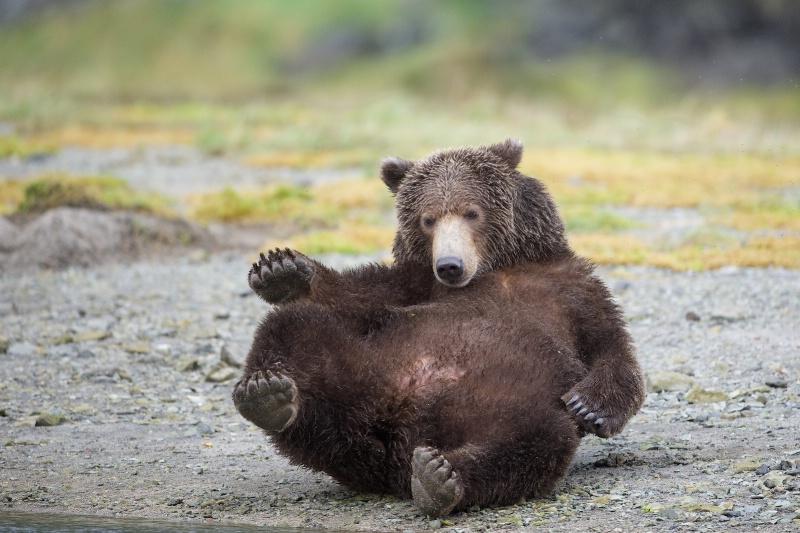 Bear Sit Up