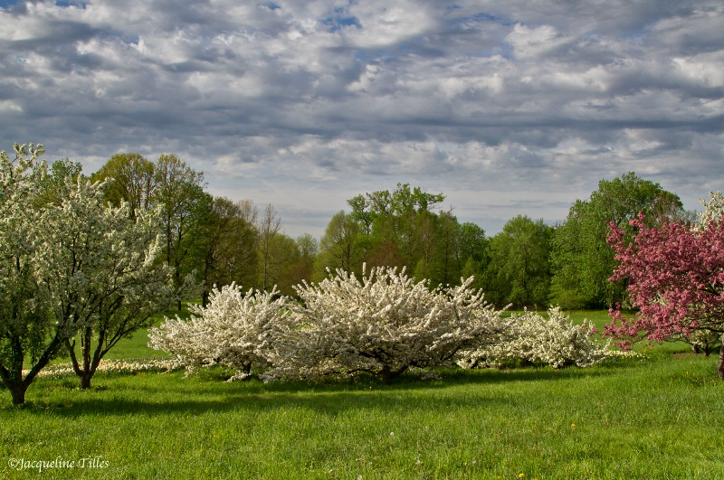 Spring Clouds and Crabapple Trees