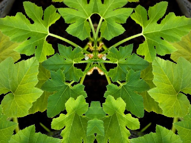 Leaf Mandala 13