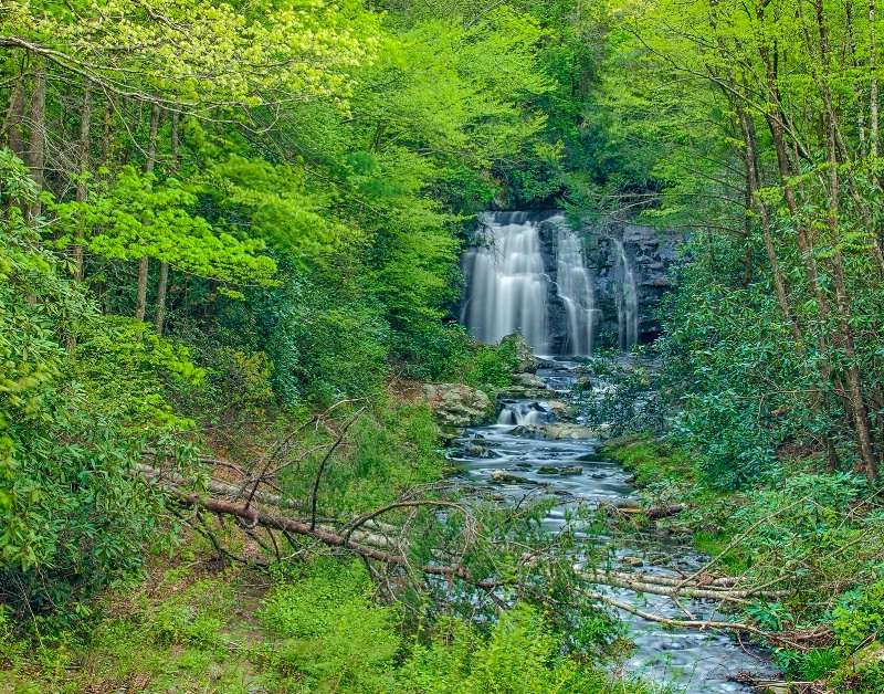 A Forest Waterfall