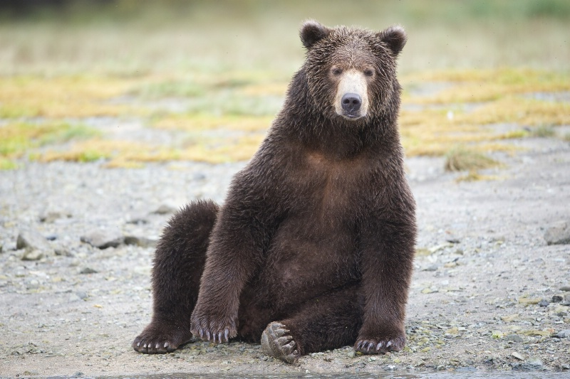 Fuzzy Wuzzy Was a Bear