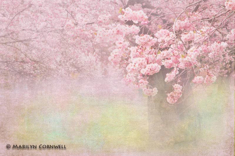 Spring Forward Fall Behind
