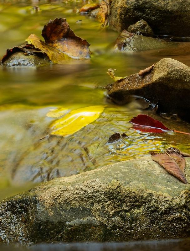 Fall Color In Stream