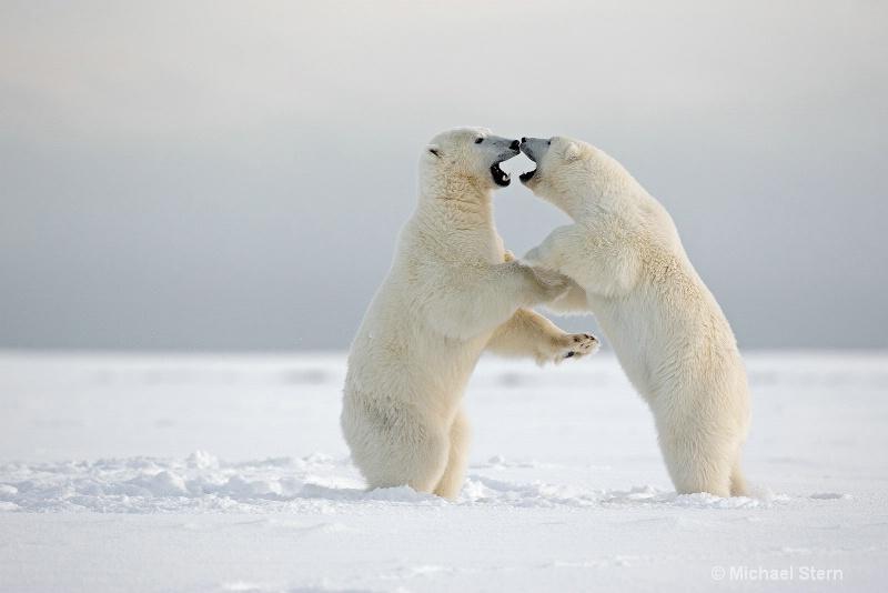 2-bears-up-1-october132013 ei7u1562kaktovik-day-8-
