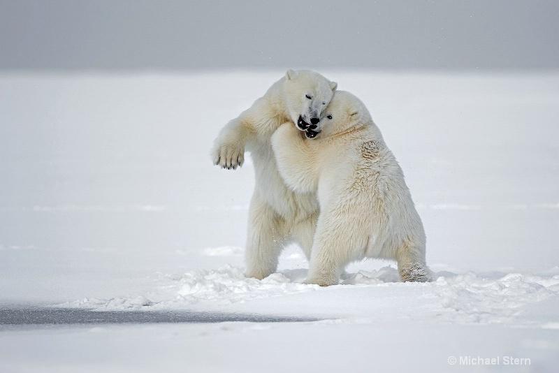 polar-bears-let s-dance-october112013 ei7u7482kakt
