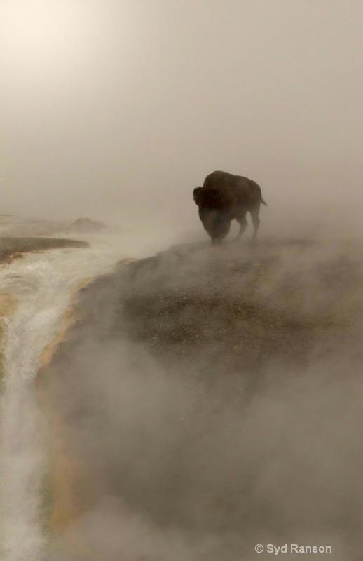 bison in mist copy