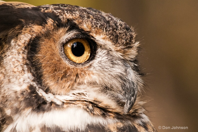 Great Horned Owl Profile