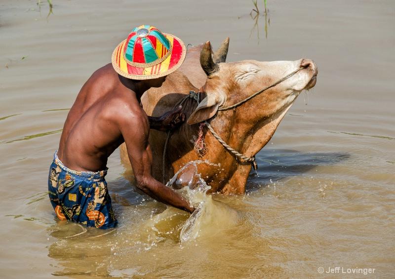 Bathing Cow, South Myanmar