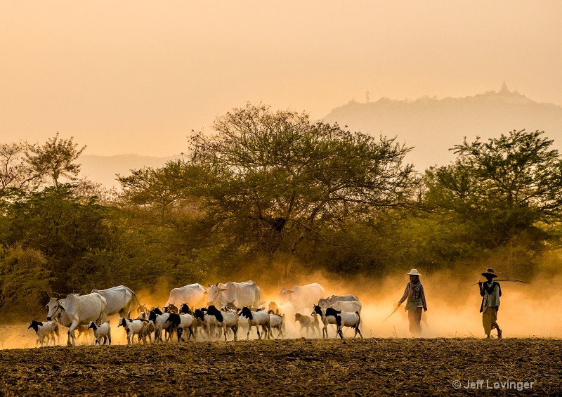 Goat Herders, Bagan, Myanmar