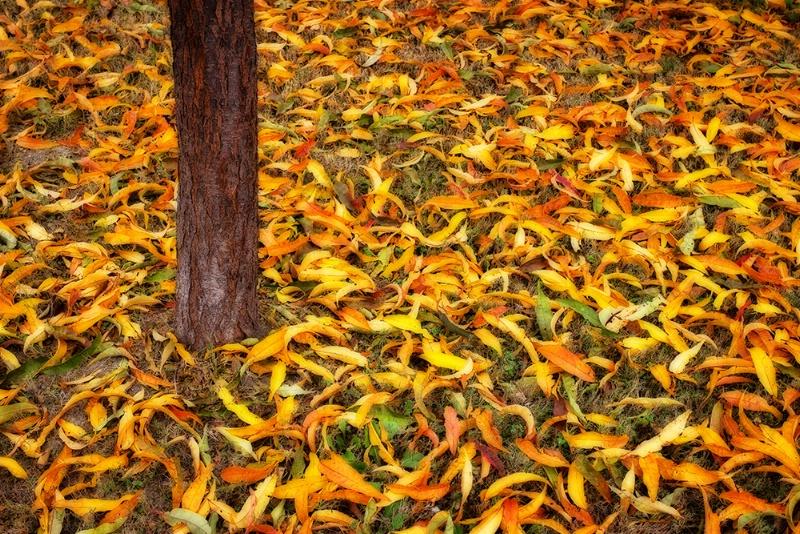 Remnants of Autumn