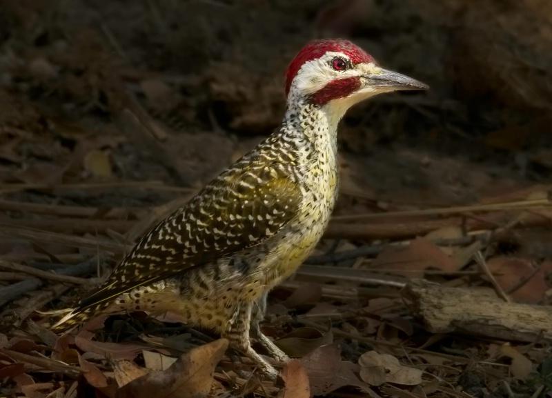 Pretty Bird Of Botswana