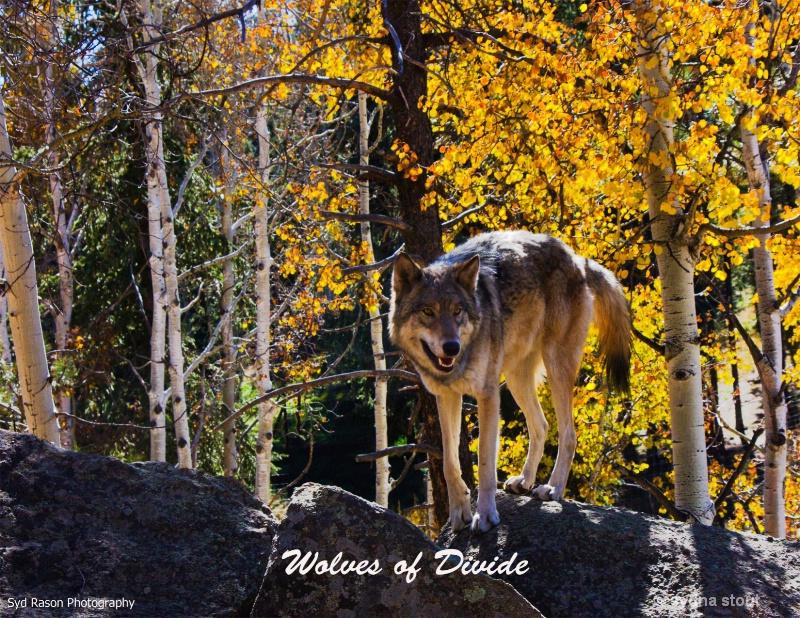 wolves of divide