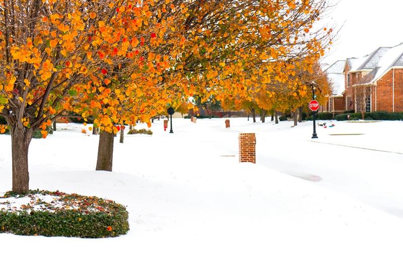 Autumn's Transition to Winter