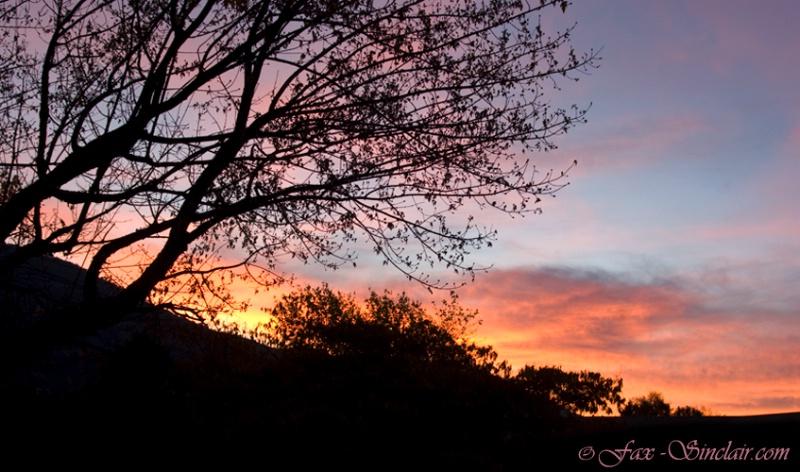 Bear Valley Sunrise