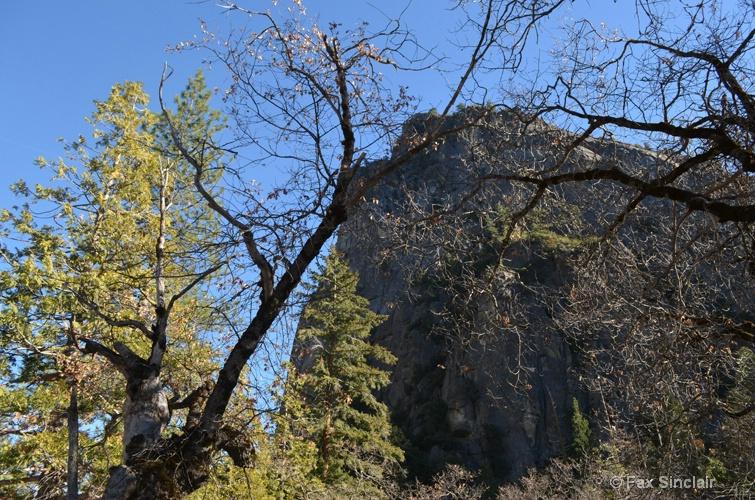 Tree Framed Mountain