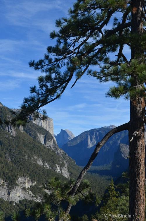 Tree Framed Halfdome