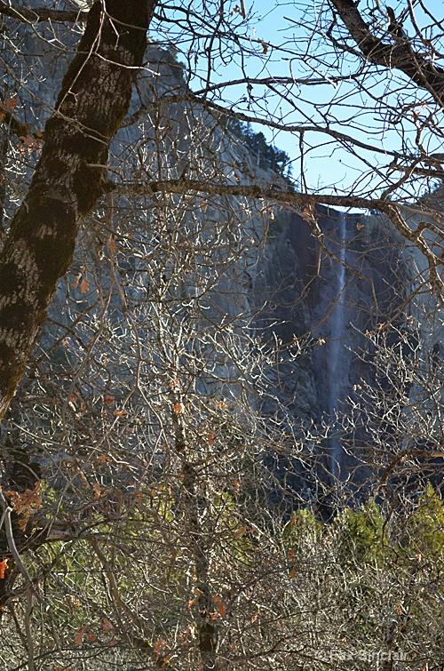 Tree Framed Falls