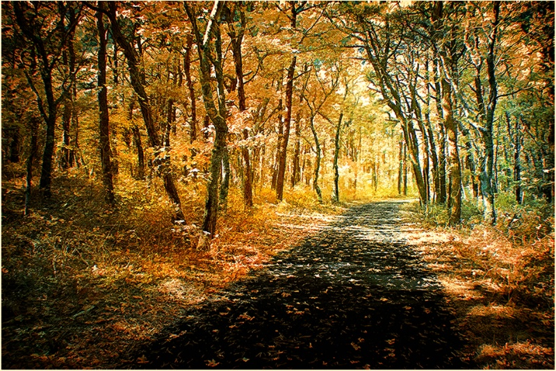 Beech Forest Trail, Province Lands, Cape Cod