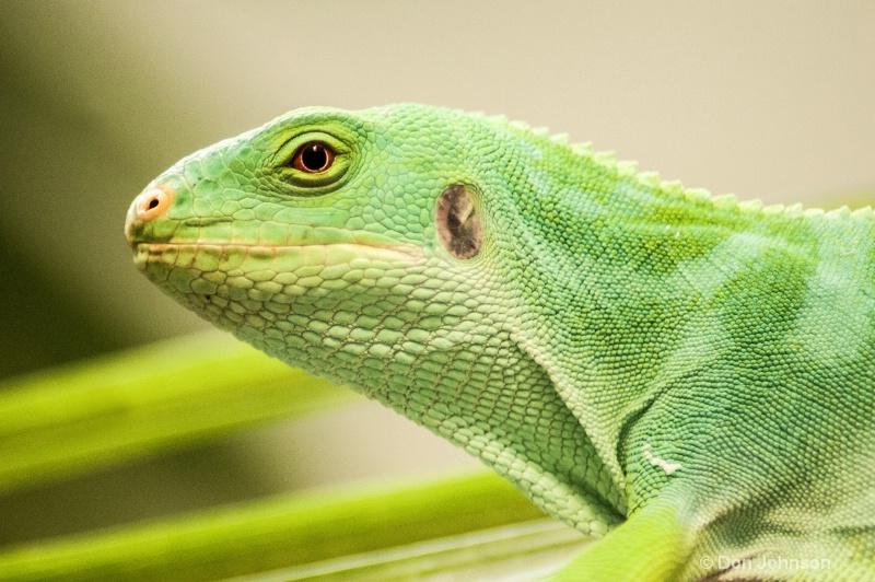 Emerald Tree Monitor
