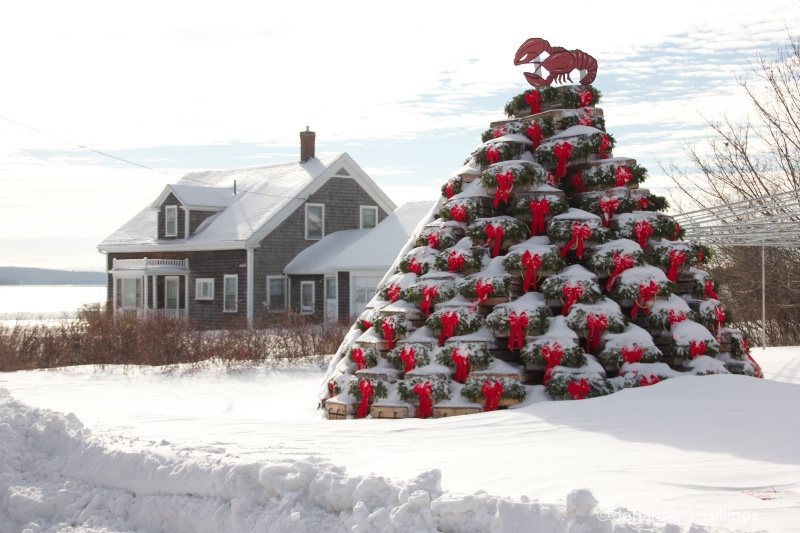 Christmas Tree Maine Style