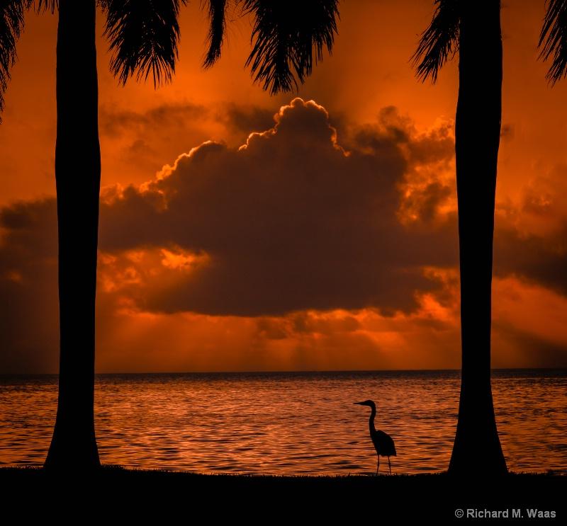 Heron's Like the Sunrise Too