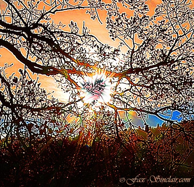 Tree Sun Mandala