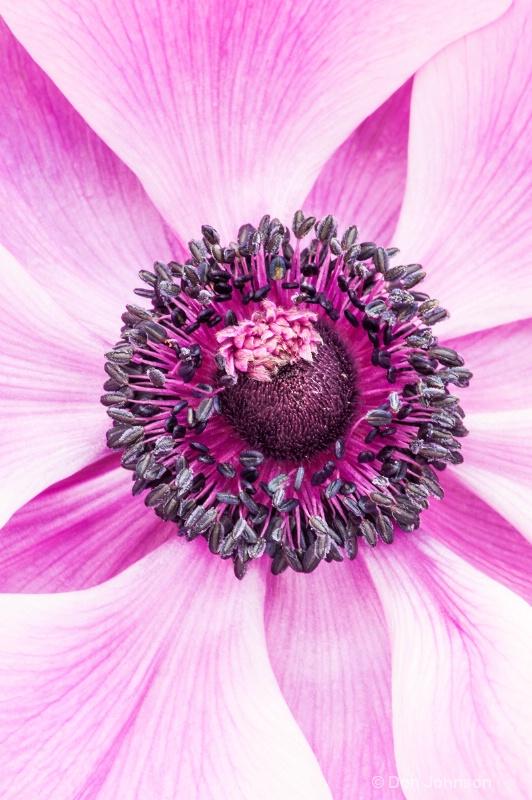 Purple Flower #1