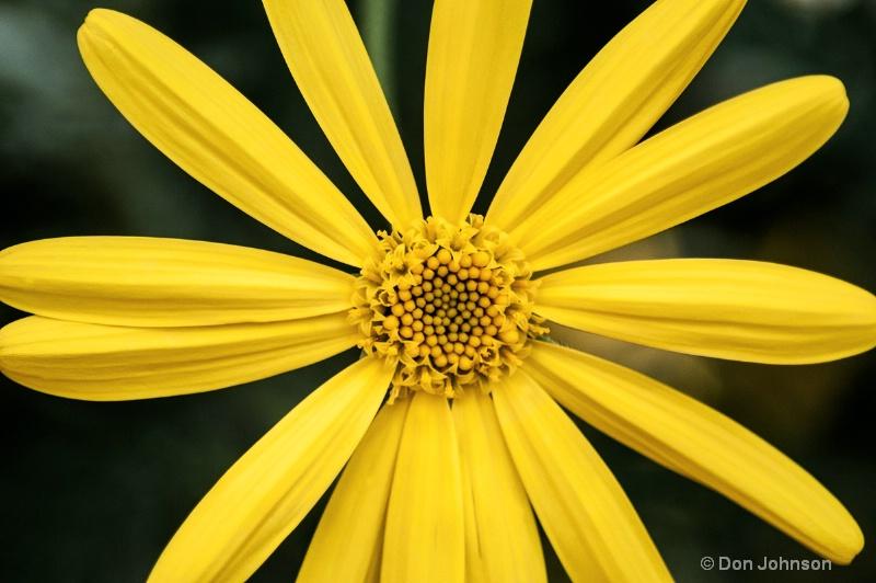 LG Yellow Daisy