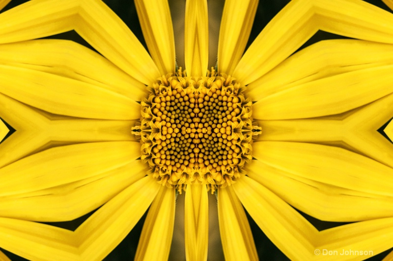 Abstract Yellow Daisy
