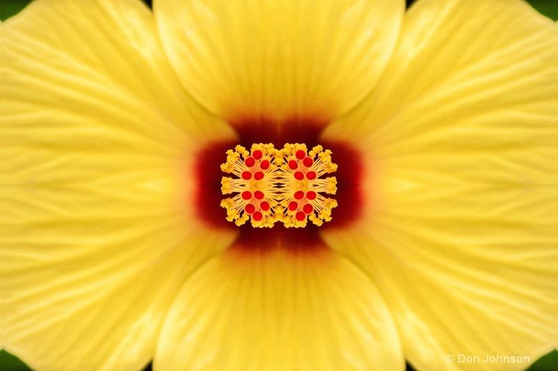 Yellow Hibiscus in Pitt-kaleidscope