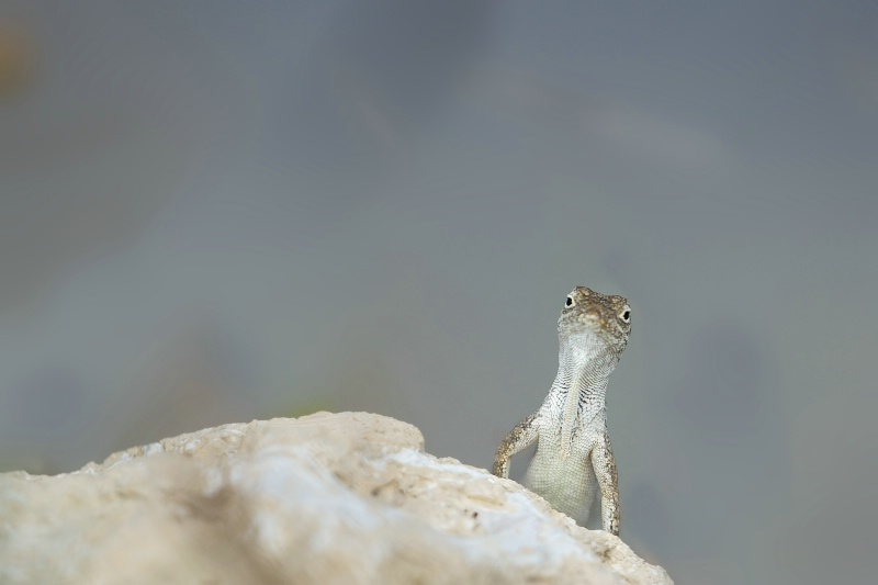 My New Friend the Gecko