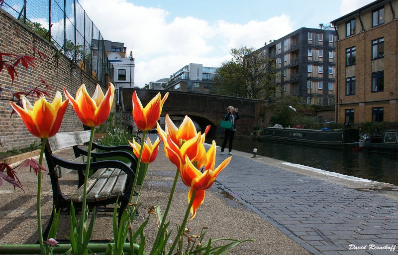 Tulips Path and Canal in London