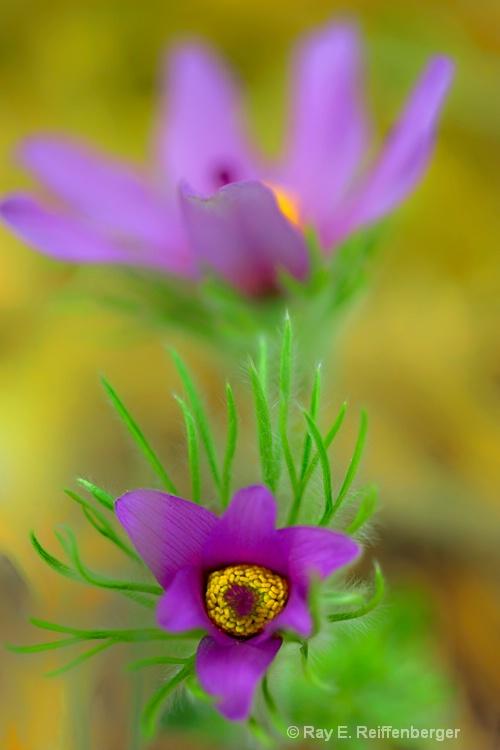 h0c1901 Flower 14