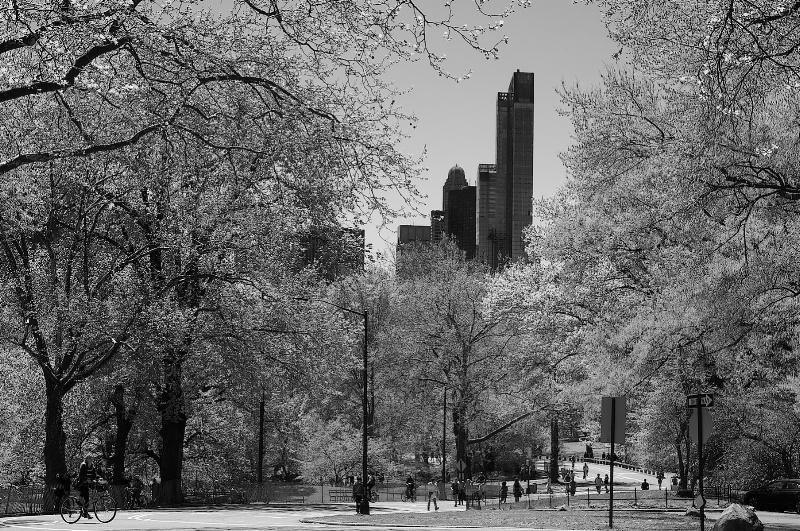 Central Park Looking South