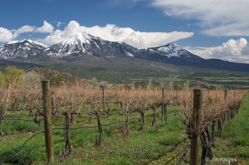 Vineyard and Mountains in Springtime