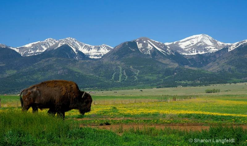 buffaloonpinesroad2