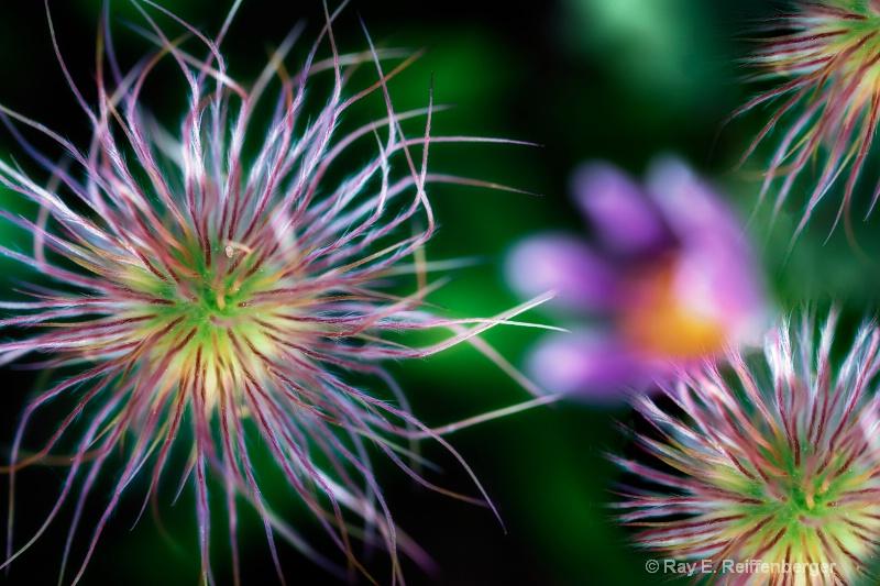 Happy July 4th Flowerworks     h0c3656x flower 14