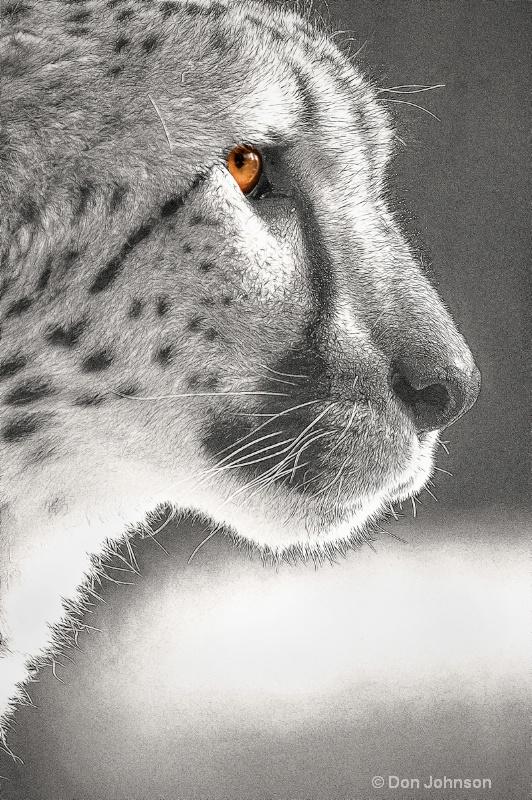 Cheetah Profile-Fract #2