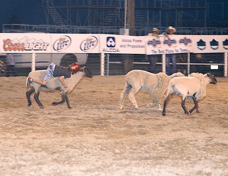 Mutton busting 2