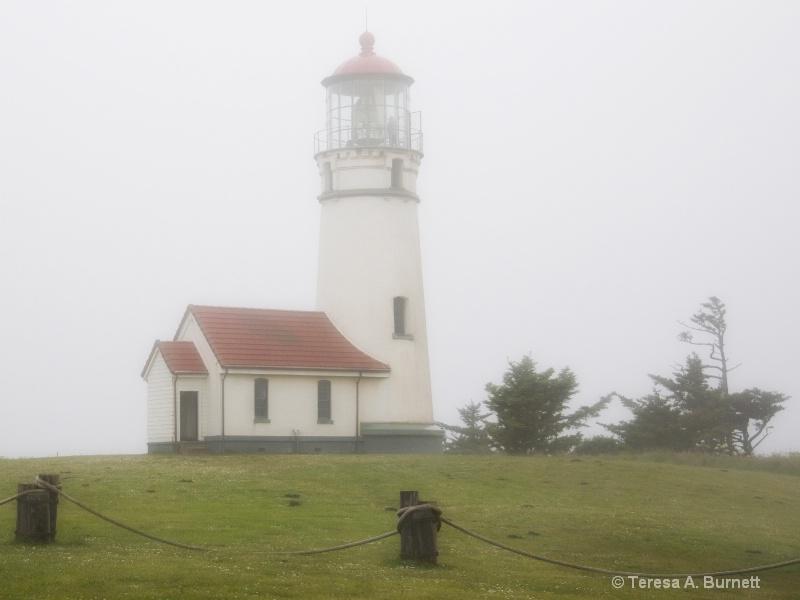 Cape Blanco In Fog