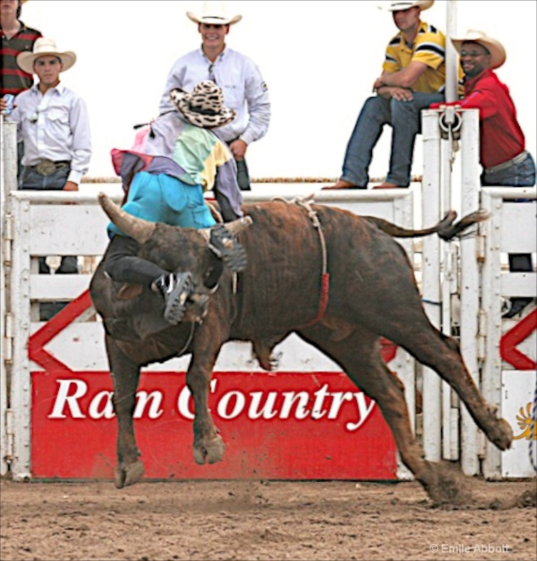 No way to ride a bull