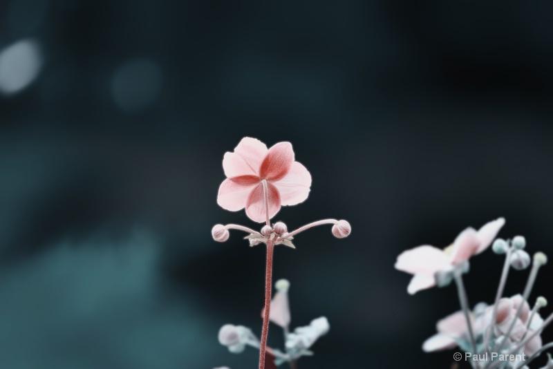 A Simple Little Flower