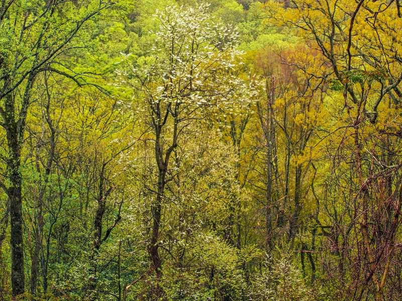 Early Spring Color In The Forest